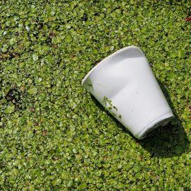 Les plastiques biodégradables : greenwashing ou réel progrès environnemental ?