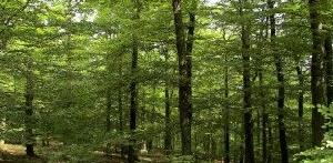 Les forêts, quel bilan carbone? fiches conseils